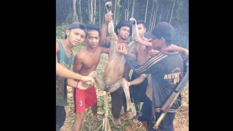 6 pria di Kalimantan unggah foto menangkap bekantan