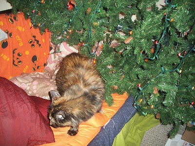 the tree after the cat knocked it over
