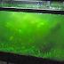 Problem Aquascape Dan Cara Mengatasinya