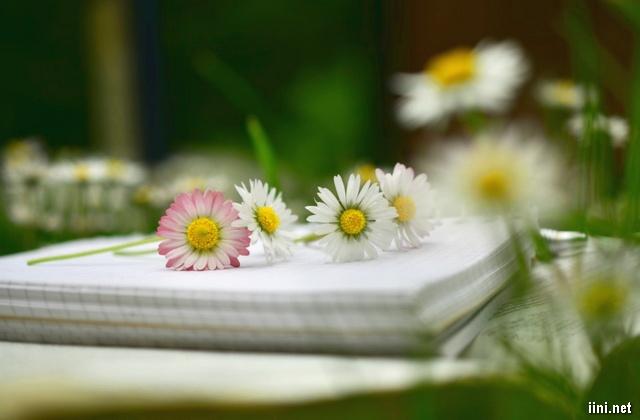 những cánh hoa bên trang lưu bút
