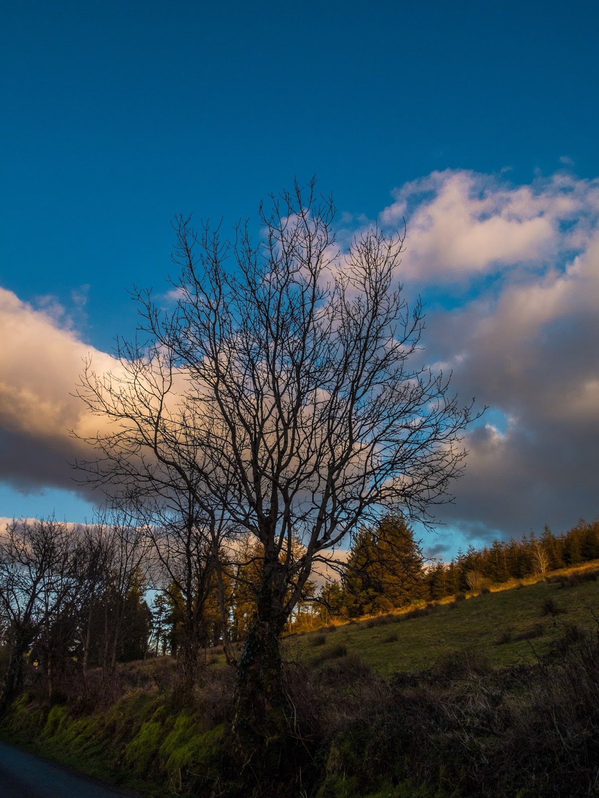View of a mountain side at sunset with clouds and tree branches.