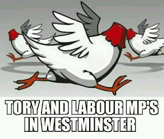 Headless chickens. Tory and Labour MPs in Westminster after Brexit vote. #ScotRef #Brexit #TheYESMovement