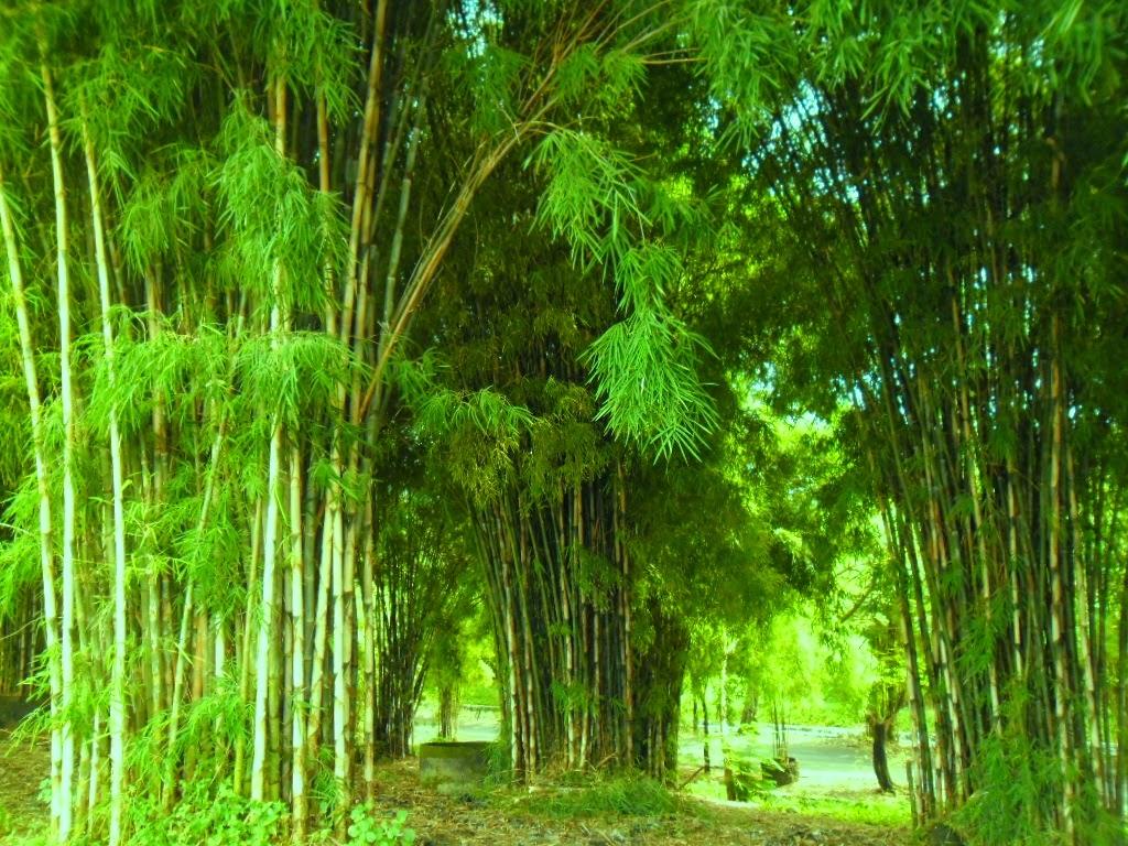 Surabaya Bagus Hutan Bambu Amp Taman Harmoni