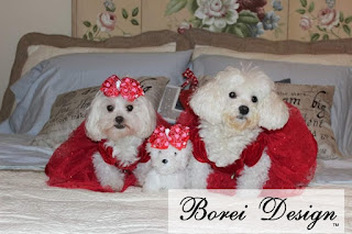 dressed-up-bella-roxy
