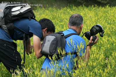 http://www.biodiversidadvirtual.org/insectarium/Testing-Punto-BV-Espacio-Pirineos-Graus-img586921.html