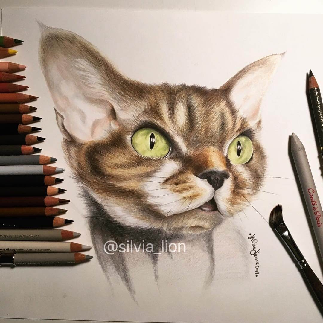 06-Charlie-Silvia-Leone️️-Cats-and-Dogs-Color-Pencil-Drawings-www-designstack-co