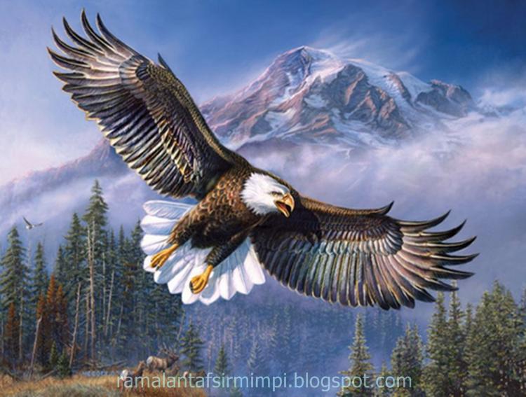 Burung elang adalah merupakan salah satu hewan berdarah panas 12 Arti Mimpi Menangkap Burung Elang Menurut Primbon Jawa