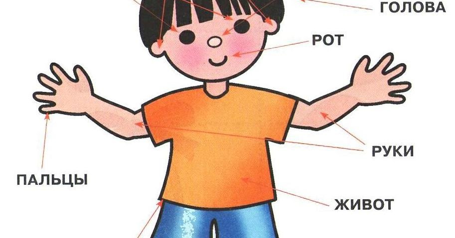 Части тела для детей в картинках, открытка помню