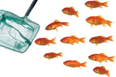 Epuisette à poissons rouges