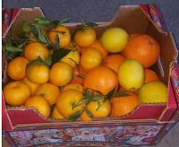 Logo Gioca e vinci gratis un pacco di agrumi misti con sorpresa!