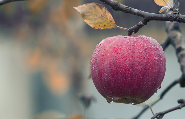 Various types of apple trees