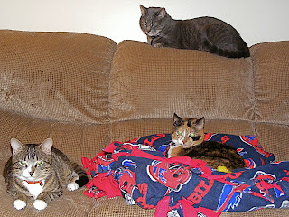 All 3 cats