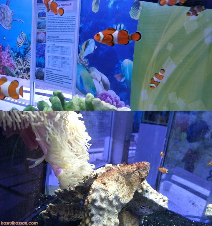 Kompleks Pusat Ikan Hiasan, Teluk Kemang Port Dickson