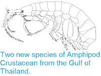 http://sciencythoughts.blogspot.co.uk/2013/06/two-new-species-of-amphipod-crustacean.html