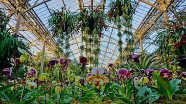 Gran fiesta de orquídeas en Longwood Gardens: Orchid Extravaganza 2019