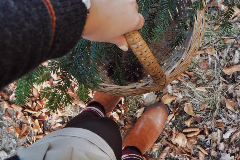 Cueillette de pommes de pin et branches de sapin en forêt