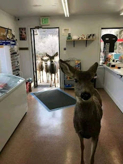 ciervo en la tienda chocolate