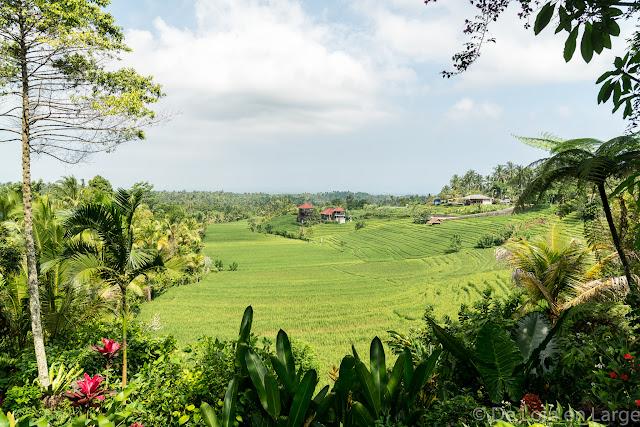 Sari Wisata - Pupuan - Bali