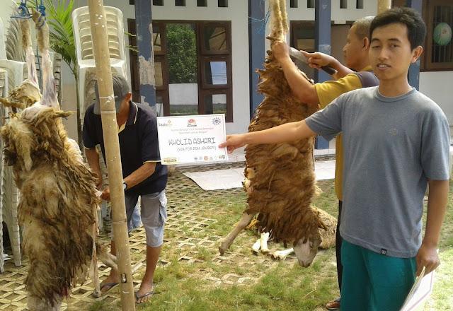 Pemotongan hewan qurban Idul Adha 1438H di halaman kantor PDM kabupaten Jember