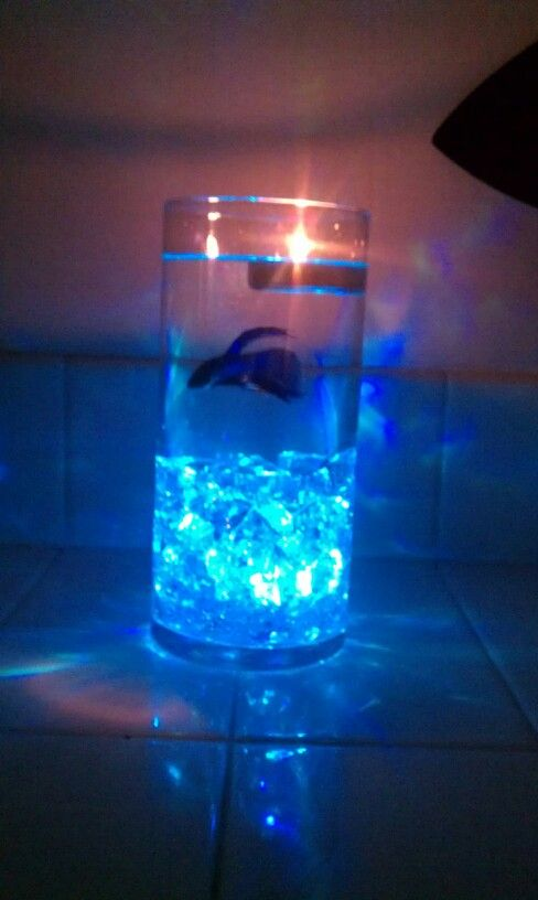 Small glass betta aquariums fish tank with light ideas for Betta fish tank light