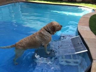 rampas para cães sair de piscinas