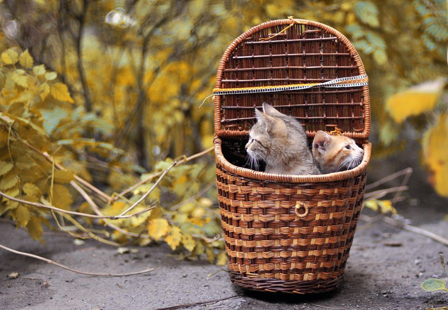 12. Cats in Basket by Yulia Stahovska