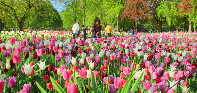 Blissful before the world's biggest Flower Garden Keukenhof
