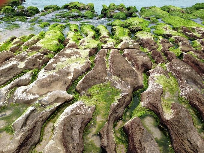 Taiwan,North coast Tour Part.3 Shimen District | Laomei Green reef  March~May Seasonal Limit