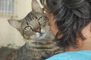 Por motivo de doença na família, tutora precisa doar gatos com urgência