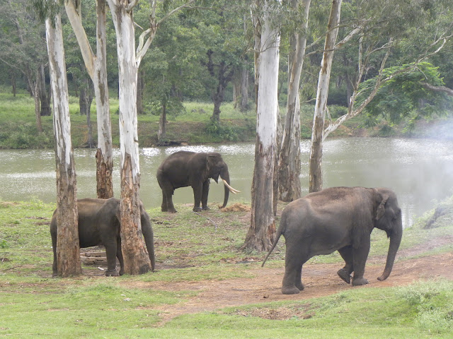Tamed Elephants, K Gudi