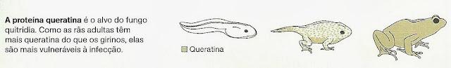 proteína-queratina-fungo-qutrídia
