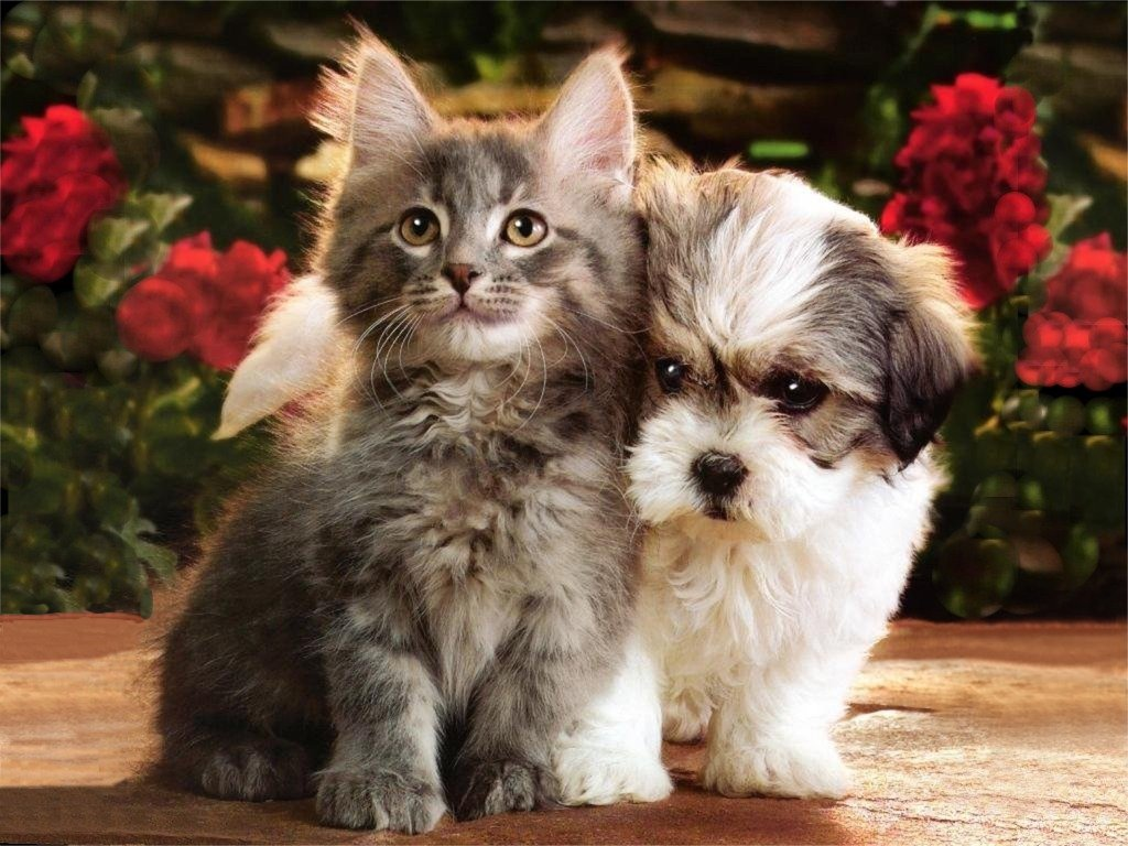 funny puppies and kittens - photo #3