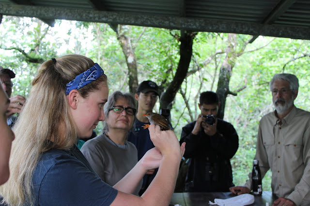 Maddy Walshak holds an orange-billed nightingale-thrush during a field lesson on studying and trapping native bird species.