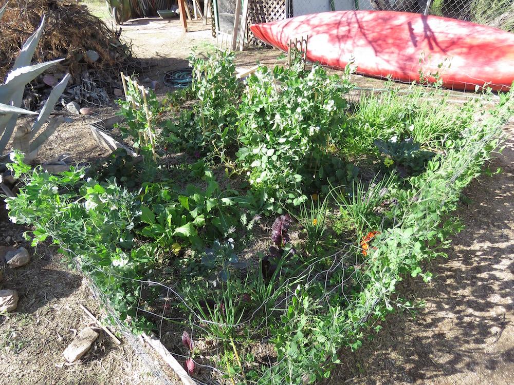 Birdernaturalist A Late January Garden And Yard Update