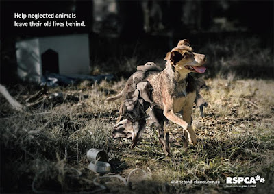 Thought Provoking Animal Advertisements
