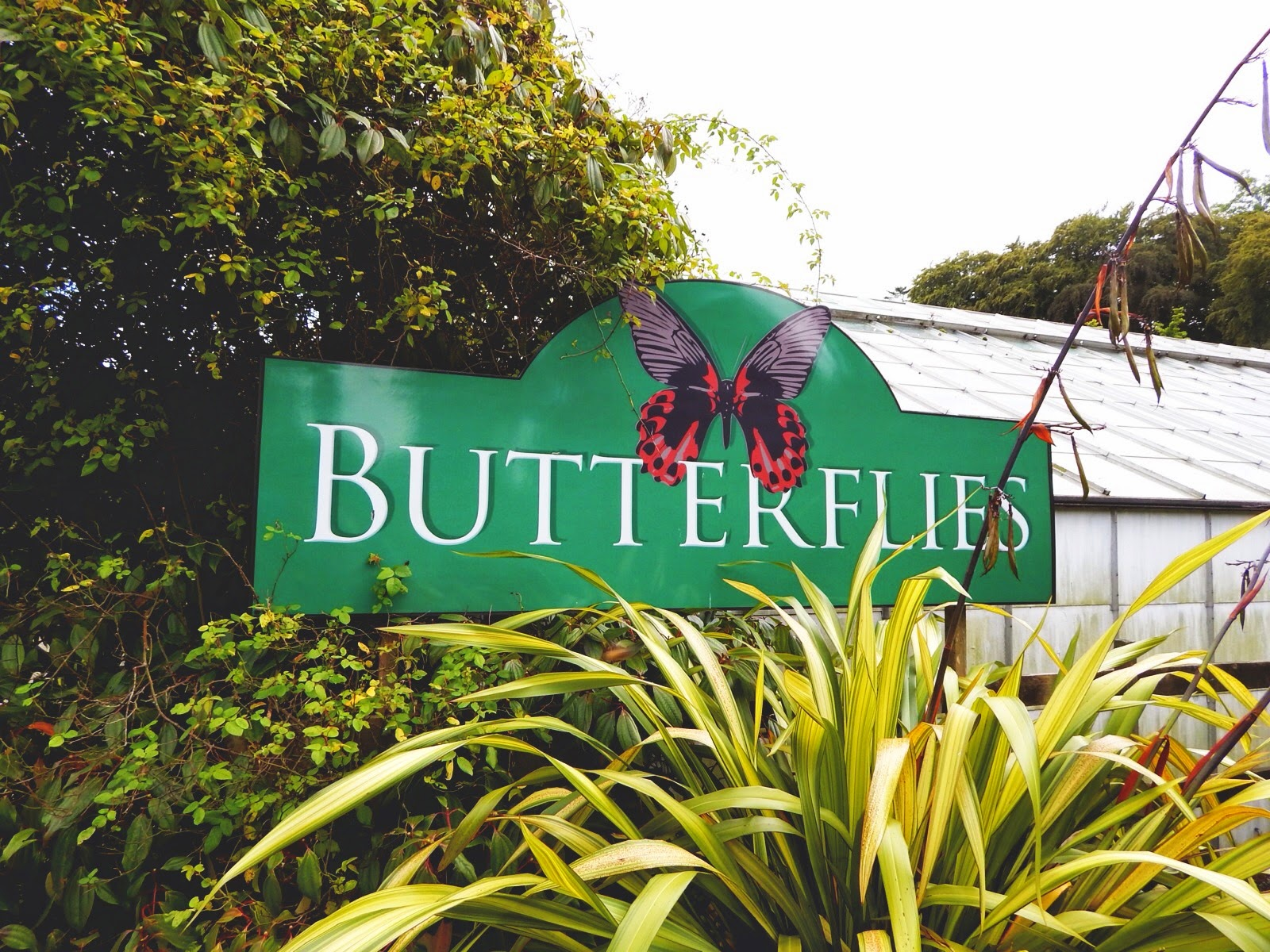 Best Kitchen Gallery: Seaforde Tropical Butterfly House Alphabeth of Tropical Butterfly House  on rachelxblog.com