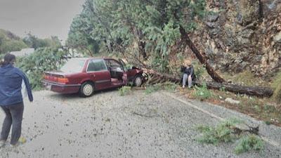 Δέντρο έπεσε πάνω σε αυτοκίνητο στην παλαιά Εθνική Ιωαννίνων-Ηγουμενίτσας (+ΦΩΤΟ)