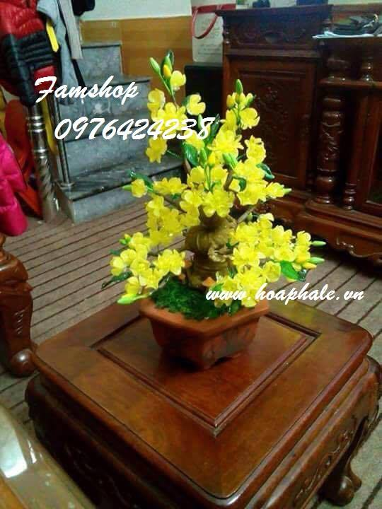 Goc bonsai mai dao tại Giai Phong