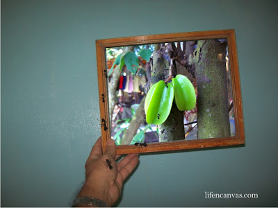 framed balimbing star fruit
