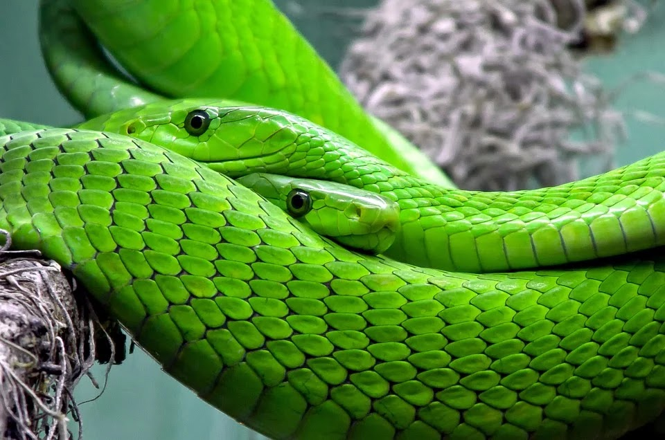 Snakes Are Probably The Reason Behind The Deadly Coronavirus In China
