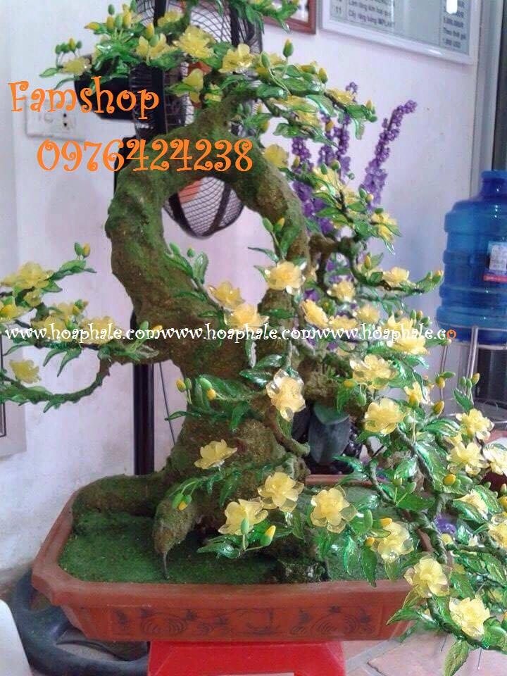 Goc bonsai cay hoa mai tai Tran Quy Kien