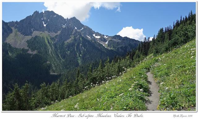 Marmot Pass: Sub-alpine. Meadows. Cedars. Fir Peaks.