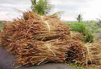 Eceng gondok sebagai potensi kerajinan berbahan alam di indonesia