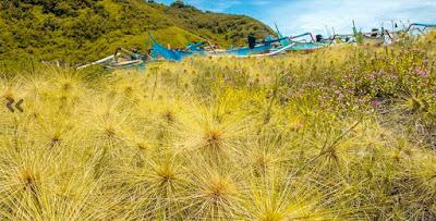 wisata pantai payangan