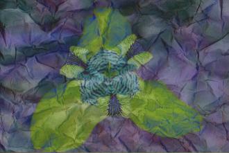Flor+Textura Papel