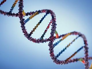 Genlerimiz Kaderimiz Mi? Evrimsel Psikoloji Hakkında Yanlış Bilinenler