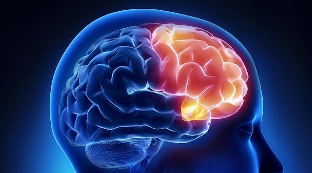 korteksi prefrontal
