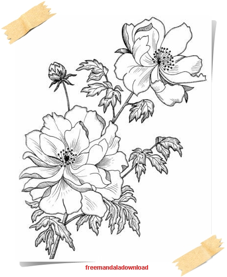 Malvorlagen für Erwachsene- Blumen und Pflanzen -Flowers and Plants ...