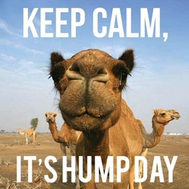 Hump Day Camel Images free