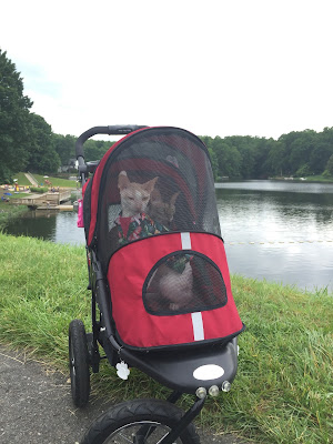 Coco the Couture Cat and Brighton, Cornish Rex Cats in a stroller by a lake